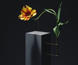 Carl Kleiner Minimalist Flowers