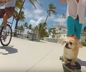 The Longboarding Dog of West Palm Beach