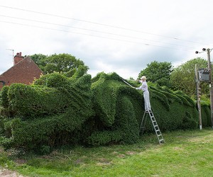 Transforming a Hedge into a Dragon in 13 years