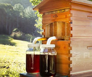 """Flow Hive 2 - the most gentle way to """"tap"""" honey"""
