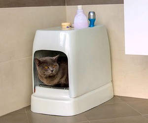 Fully automatic litter box makes the cat happy