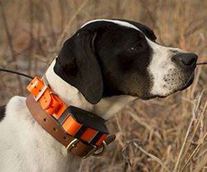 Garmin Astro | Dog Tracking System