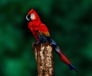 Unreal, This Parrot is Actually a Woman Posing