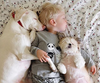 nappingwithnora -Archie slumbers in protective dog