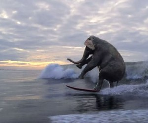 Best of Surfing Animals (Video Compilation)